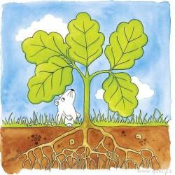 Vývojové vrstvené puzzle - Vývoj stromu